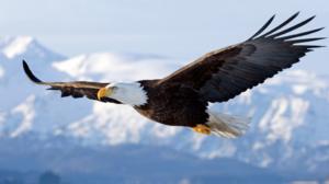 La configurazione winglet è stata studiata attraverso il volo di alcuni animali.